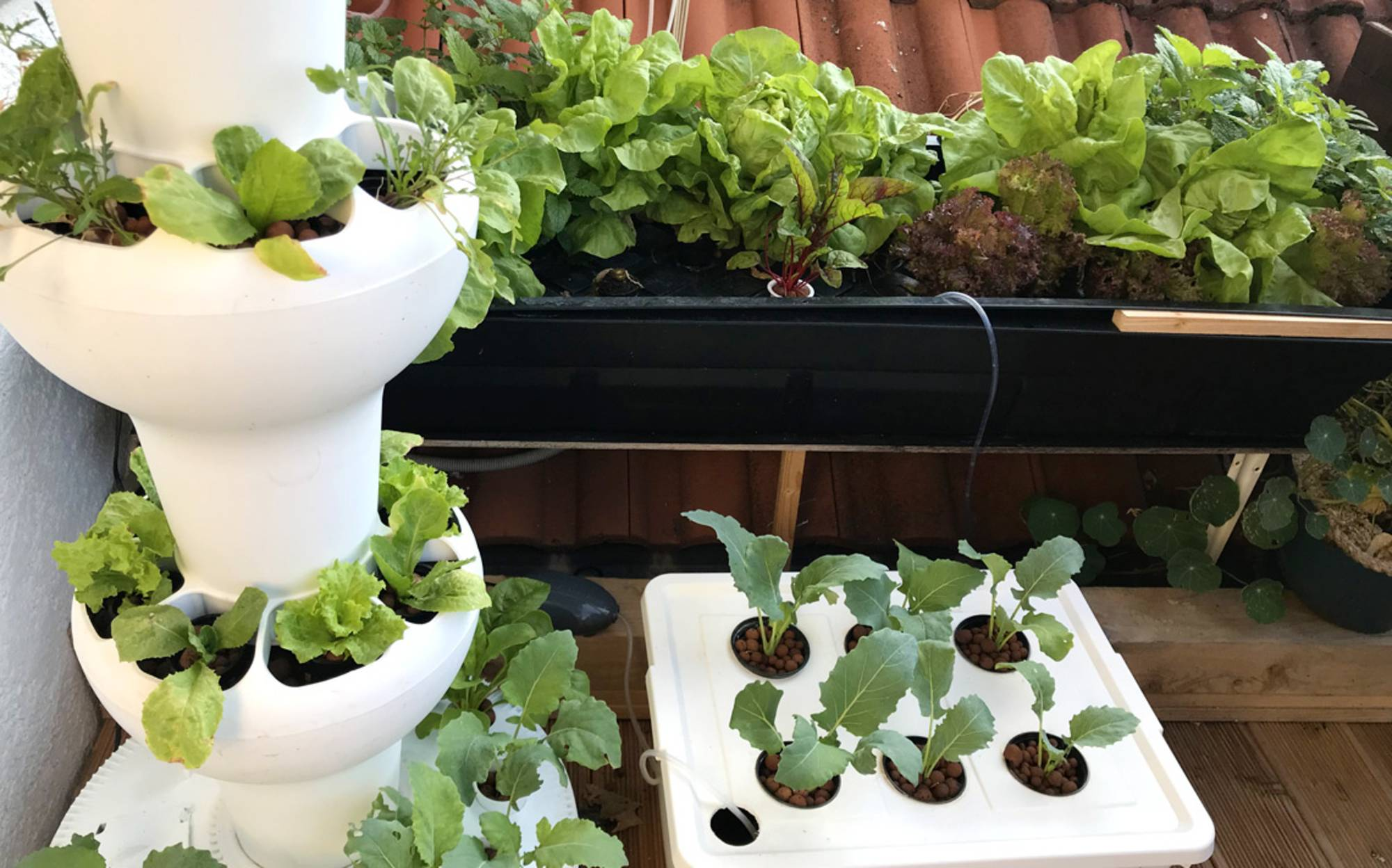 Hydroponic 2018 Herbs And Vegetables On The Balcony