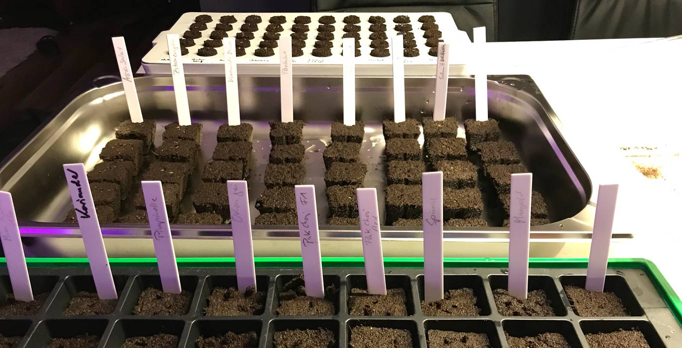 Germination in Eazy Plug substrate