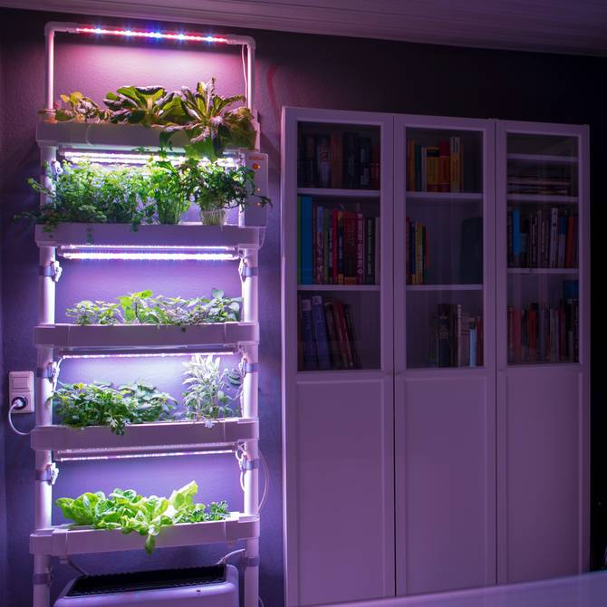 Indoor Garden in the library - Hydroponics wall system